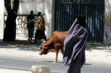 Mujer y vaca paseando en Mogadiscio_3_web